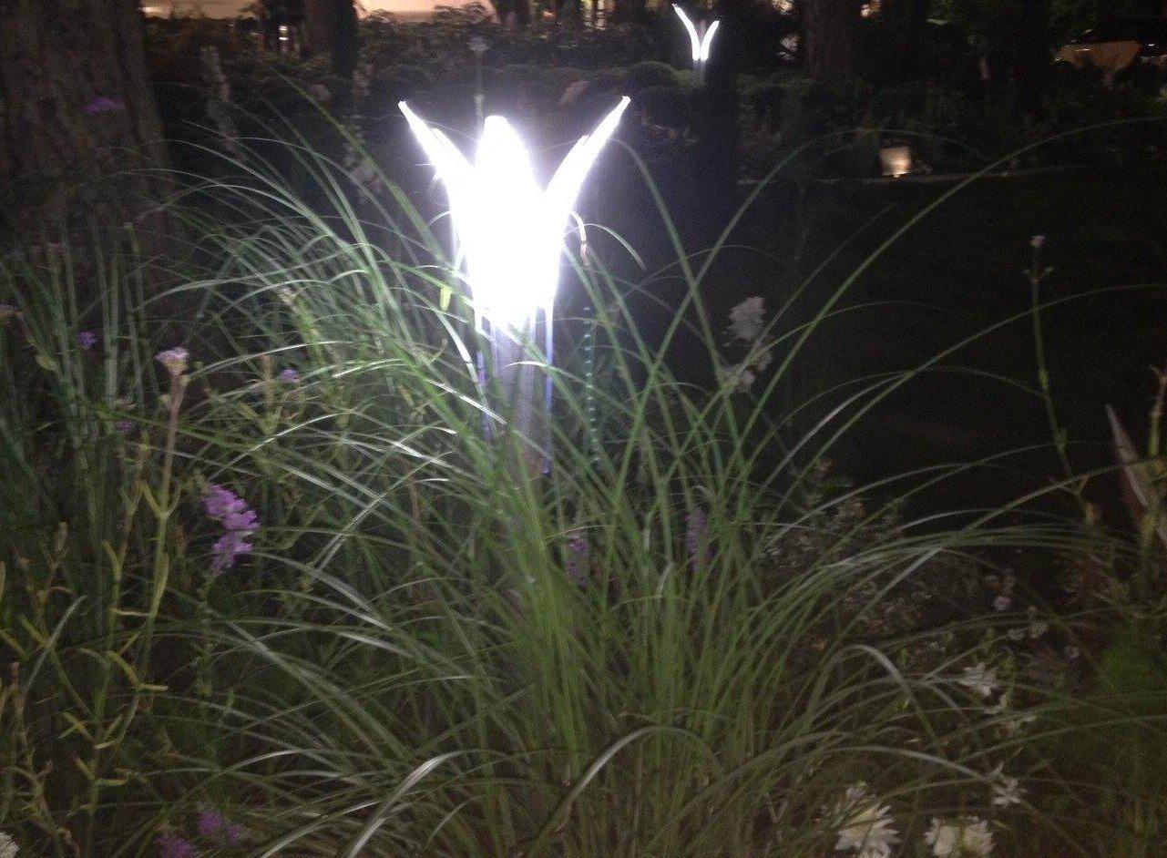 Illuminazione Fiori nel Giardino