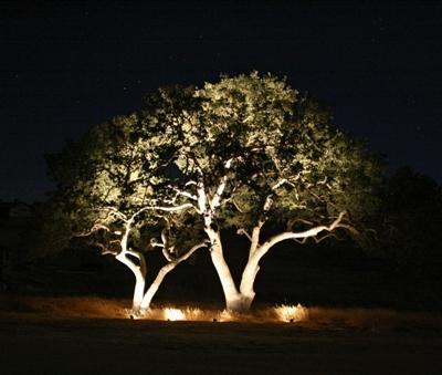 Illuminazione alberi faretti Led esterno