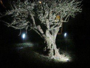 Illuminazione Ulivo Giardino