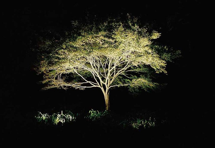 Illuminazione alberi piante e fiori illuminazione giardino