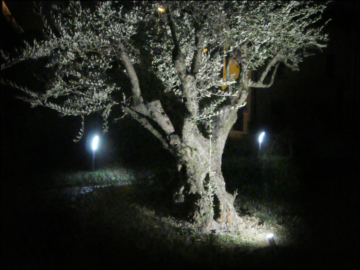 Faretti led da esterno e da interno illuminazione giardino - Prezzi alberi da giardino ...