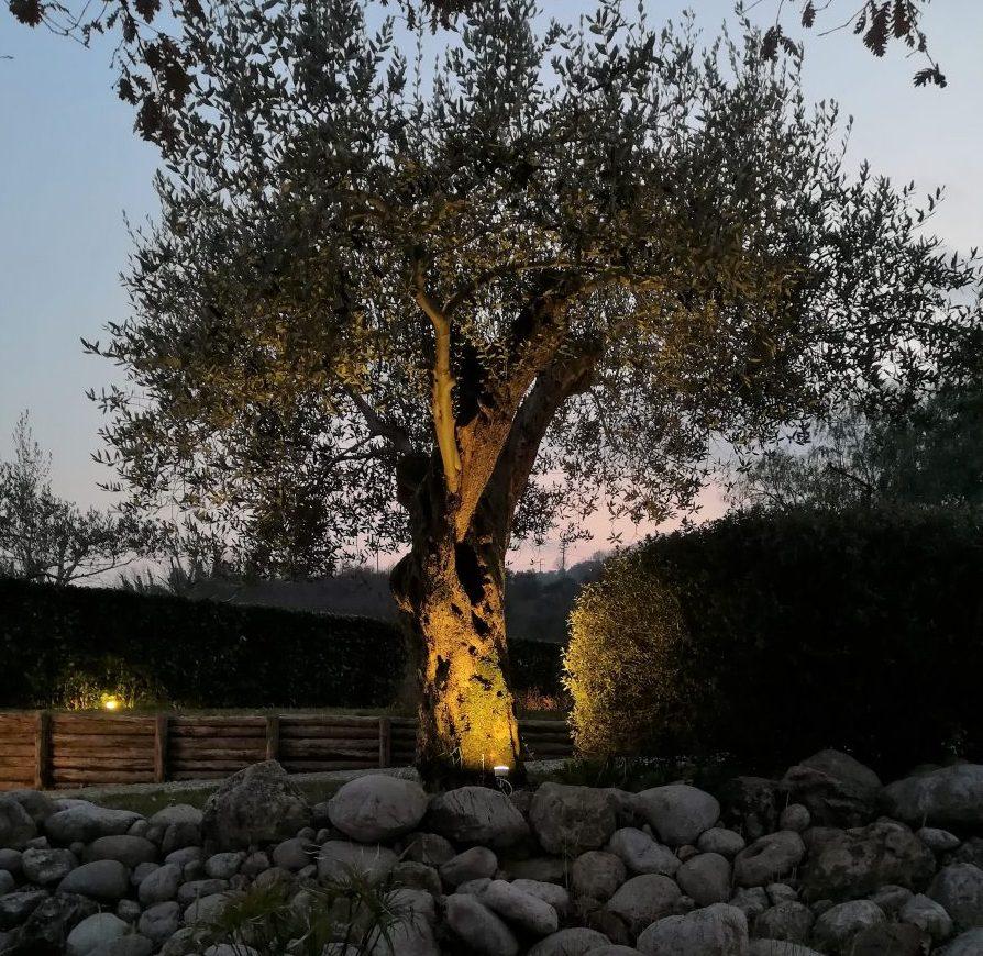 Illuminazione alberi piante e fiori illuminazione giardino for Alberi da giardino con fiori