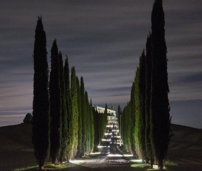 Spunti ed idee con i faretti per illuminare alberi for Catalogo alberi da giardino